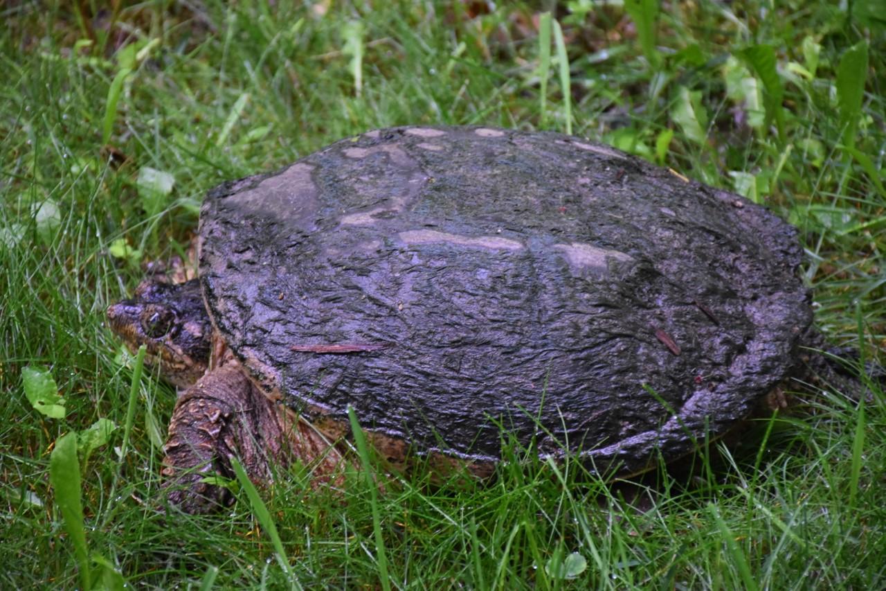 CPP Tortoise.jpg