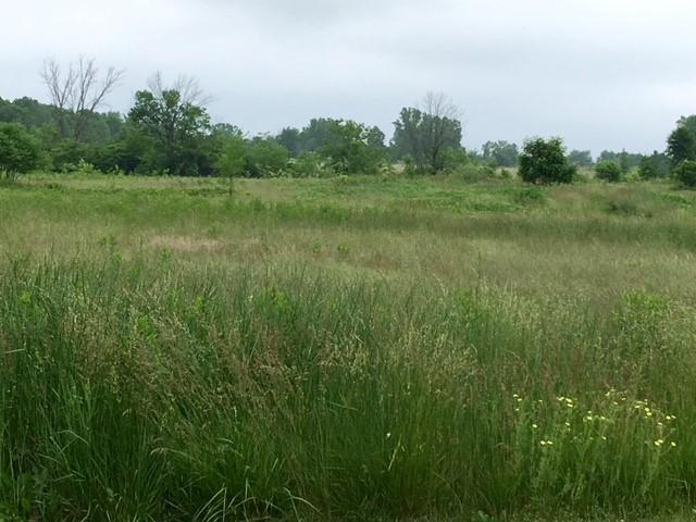 CTPP field.jpg