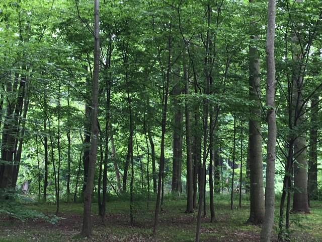 CTPP woods.jpg