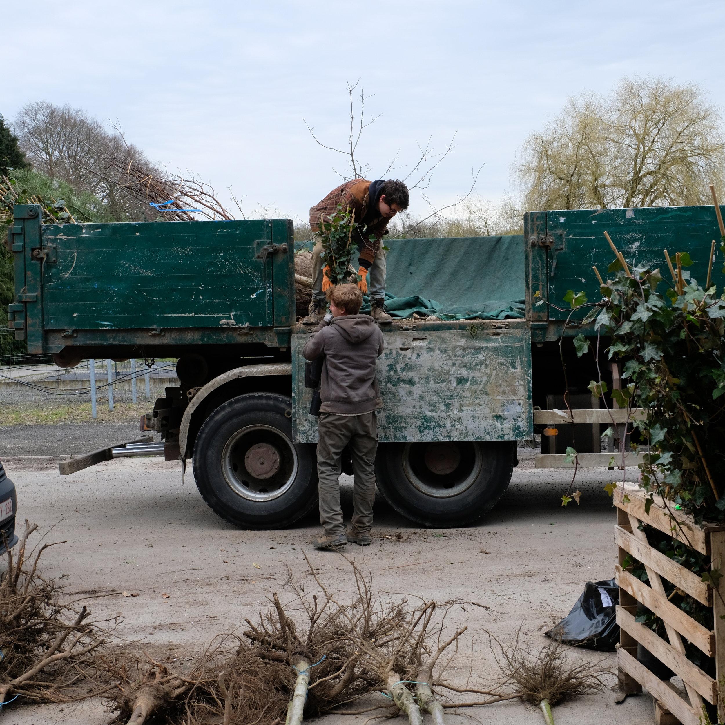 photo-ferme-ecologie-belgique-bio-pepiniere-fleurs-feuilles-racines-nues-fruitier.jpg