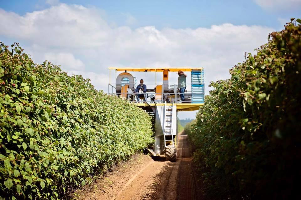 Rasp Harvester.jpg