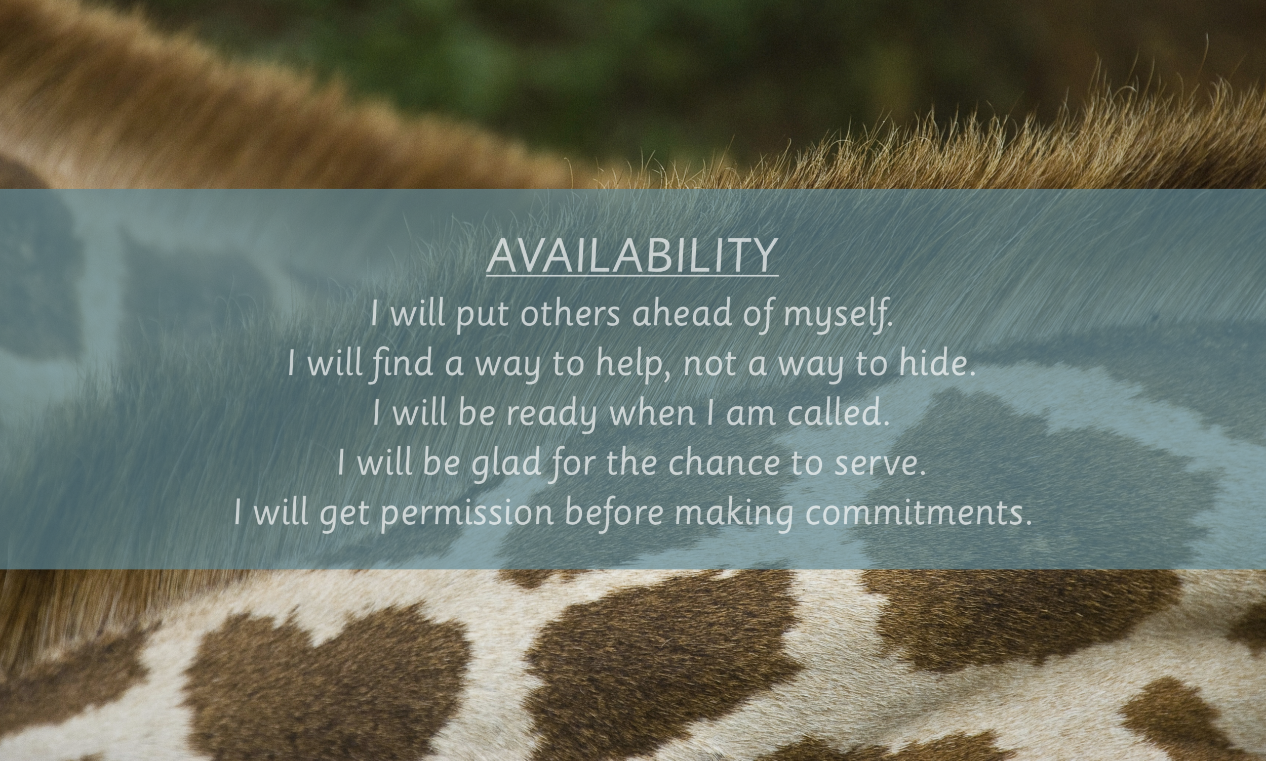AVAILABILITY I WILLS.png