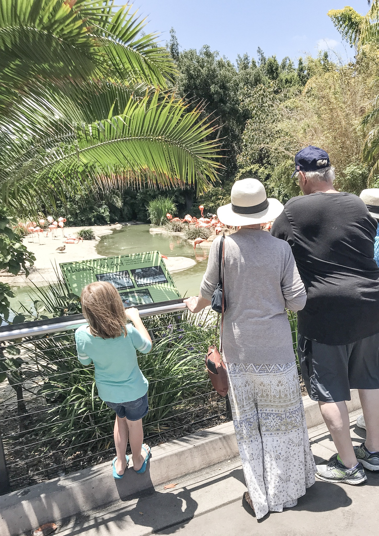 Checking out the flamingos with G-Mom and Papa