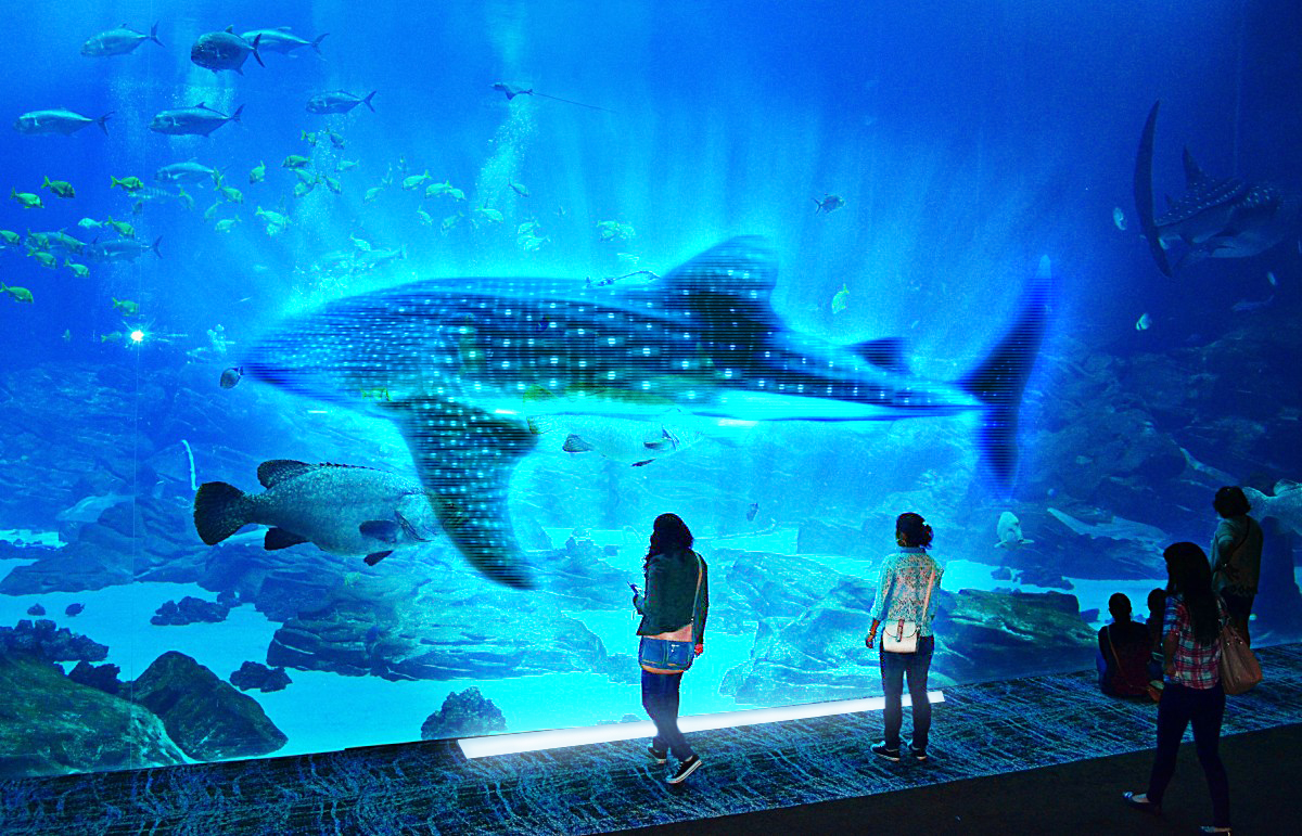 Interactive hologram display. Guests select holograms of different aquatic animals that either cannot survive aquarium life or are extinct, getting as close as possible to experiencing them in real life.