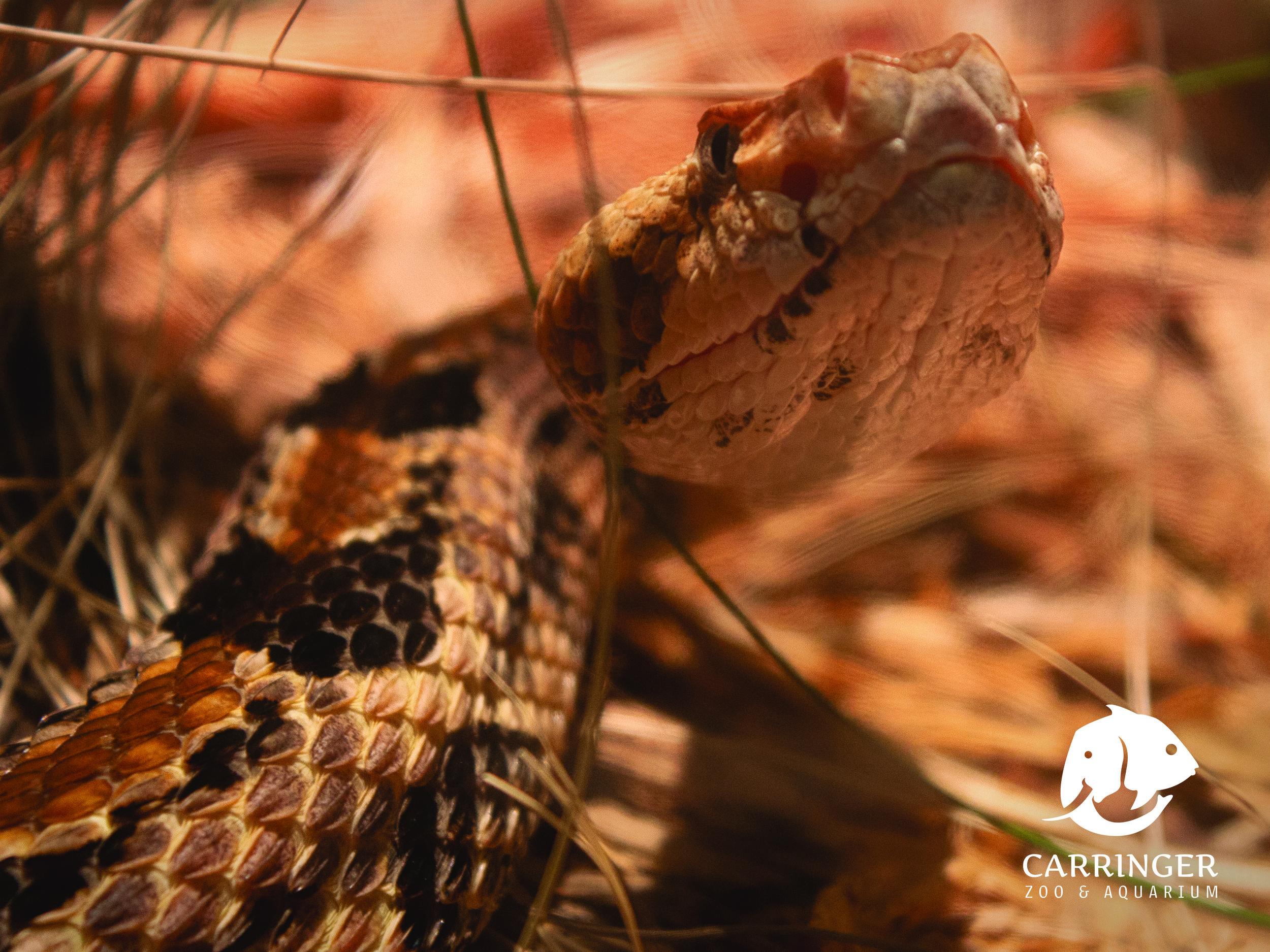 Snake-2.jpg