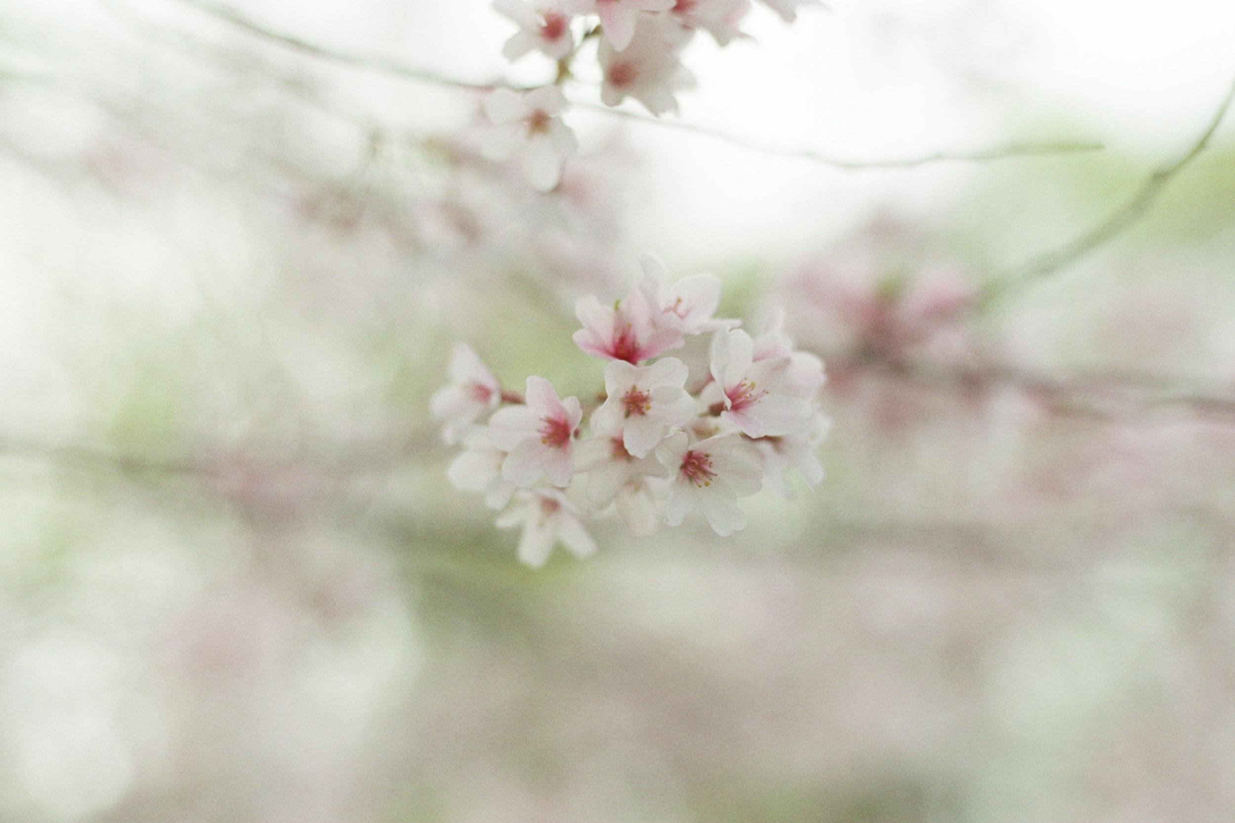 blur-3475.jpg