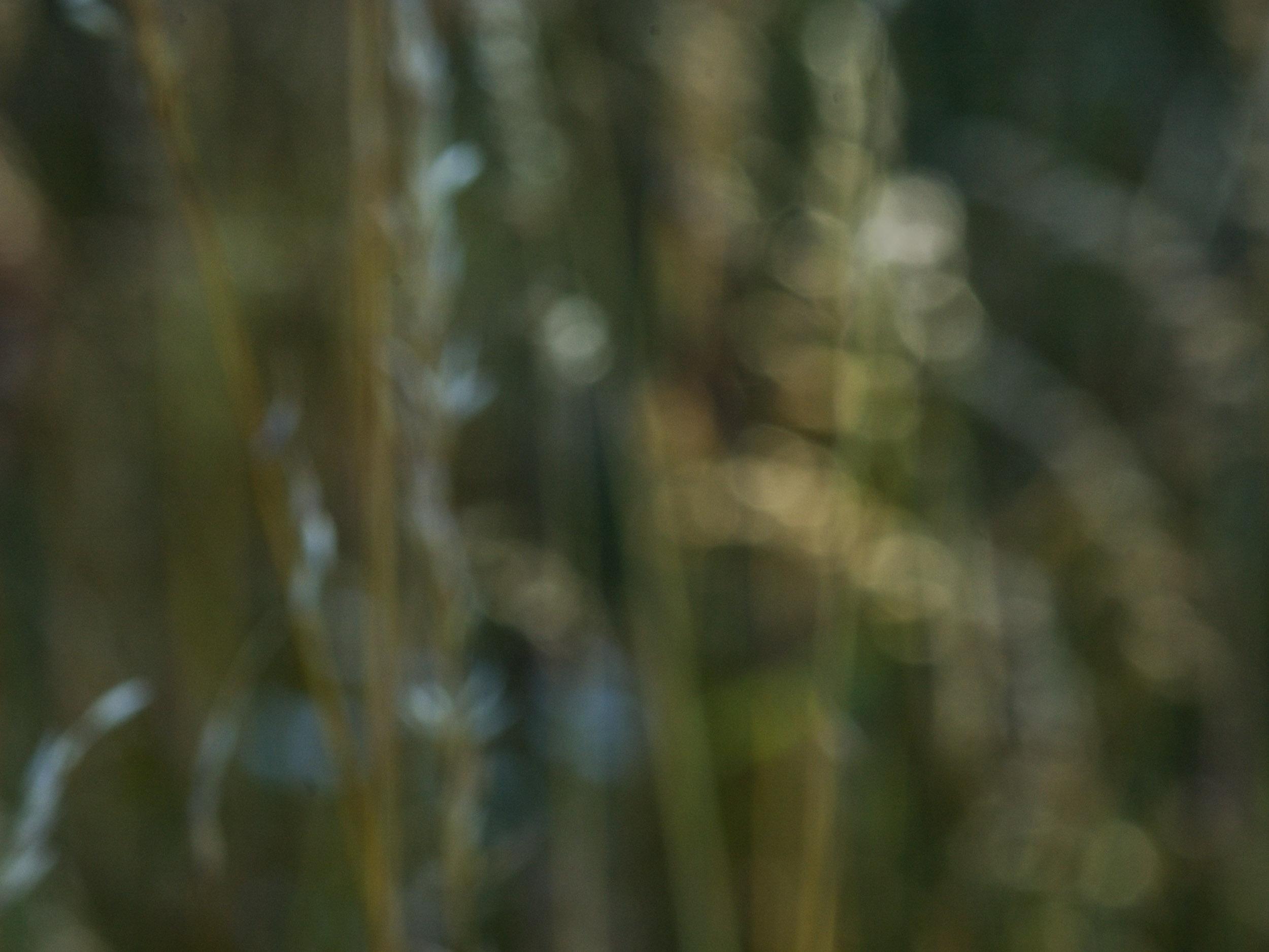seeking light-0505.jpg
