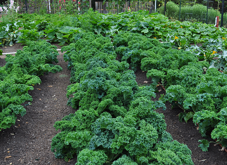 At The Ashram, we seasonally grow most of the vegetables you will consume in our very own organic garden.