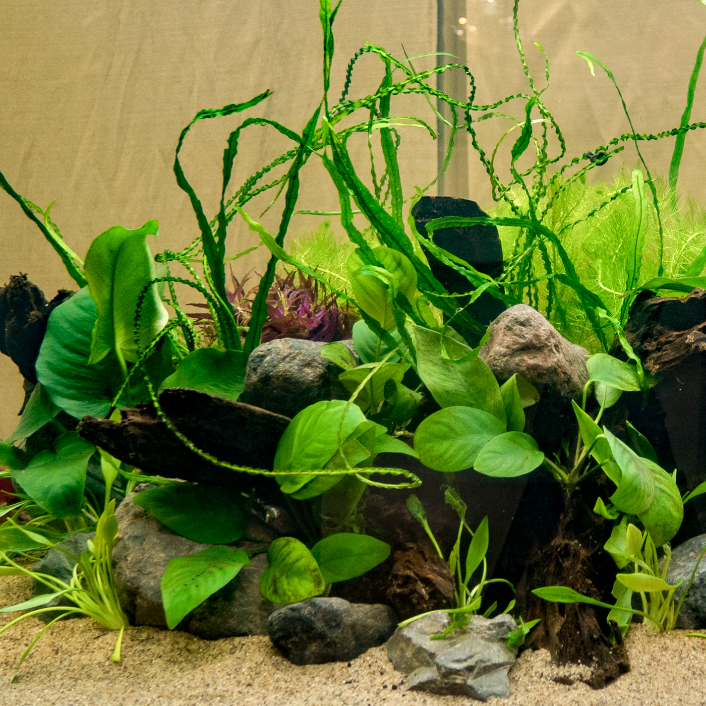 2017 02 09 Mad-Town Aquascaping Contest (177 of 287).jpg