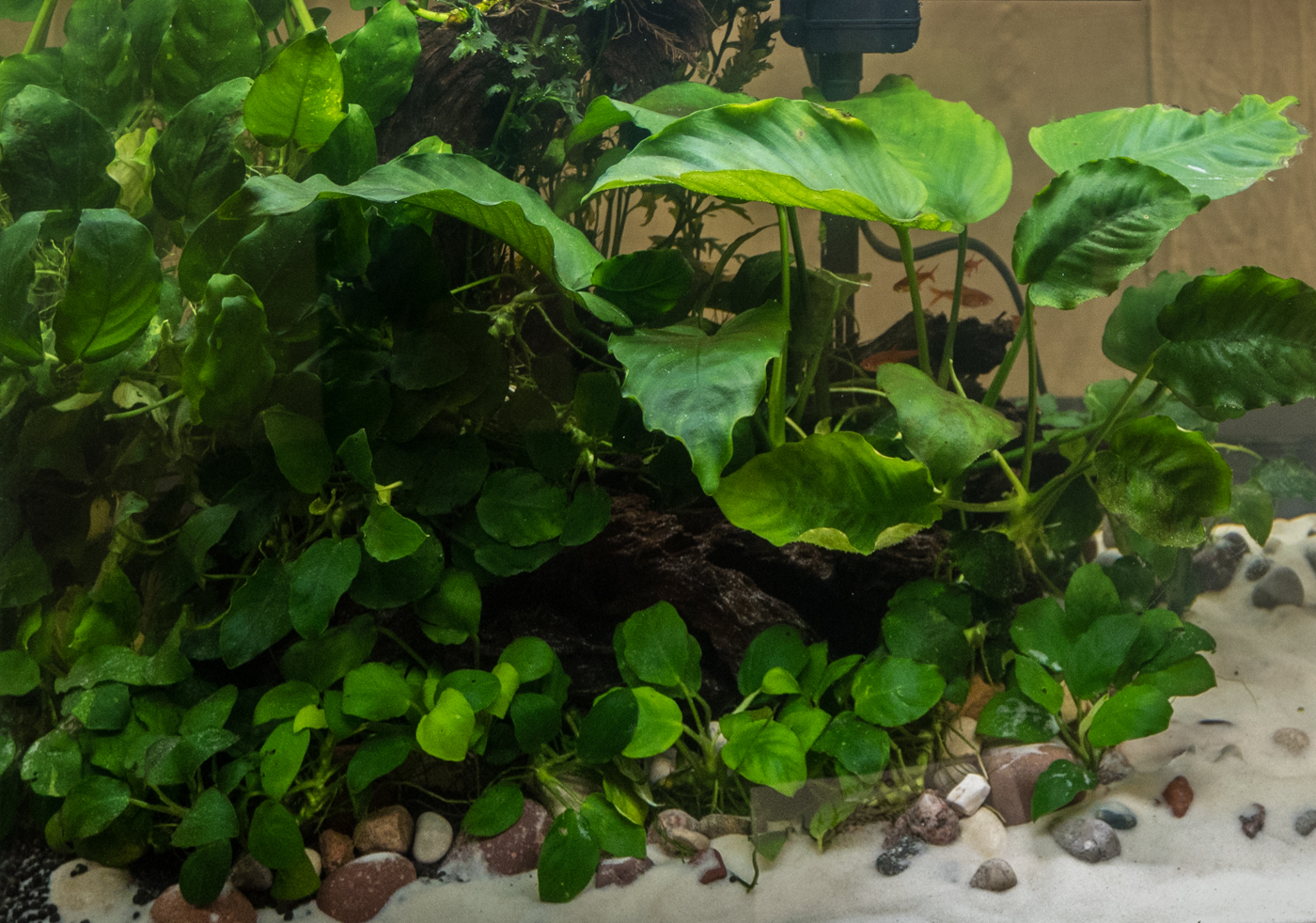 2017 02 09 Mad-Town Aquascaping Contest (116 of 287).jpg