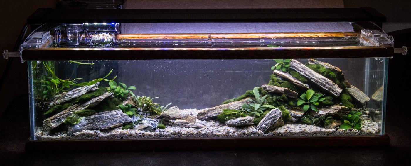 2018 01 29 Tiny Tank (1 of 3).jpg