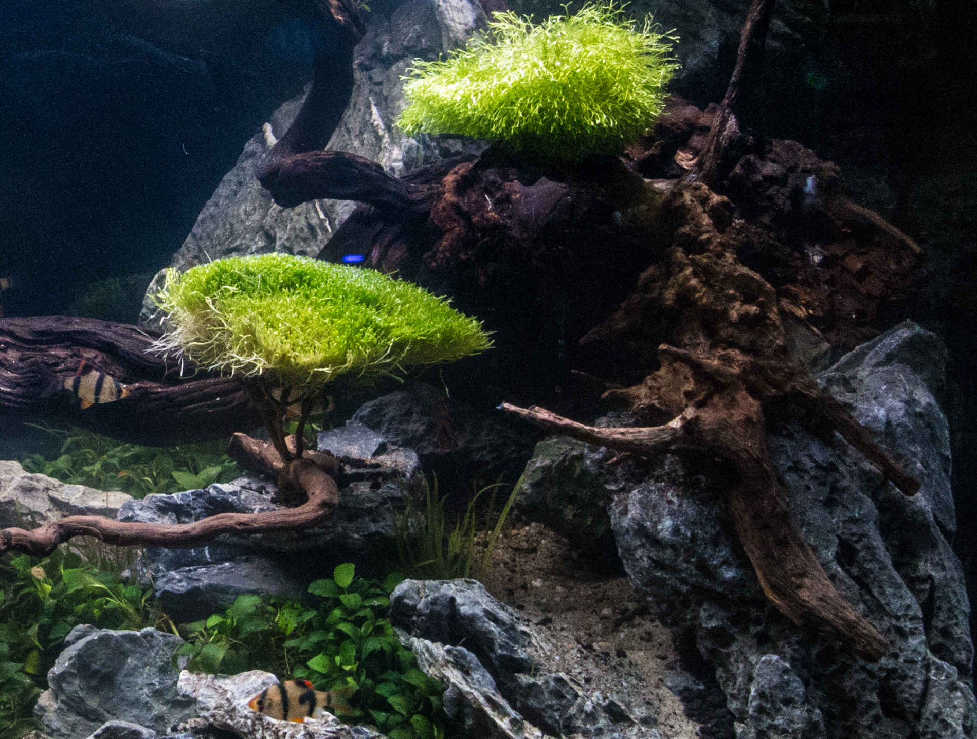 2018 10 20 Aquatic Experience (395 of 617).jpg