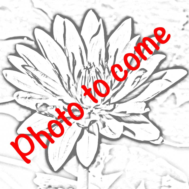 1 FAN Waterlily photo to come.jpg