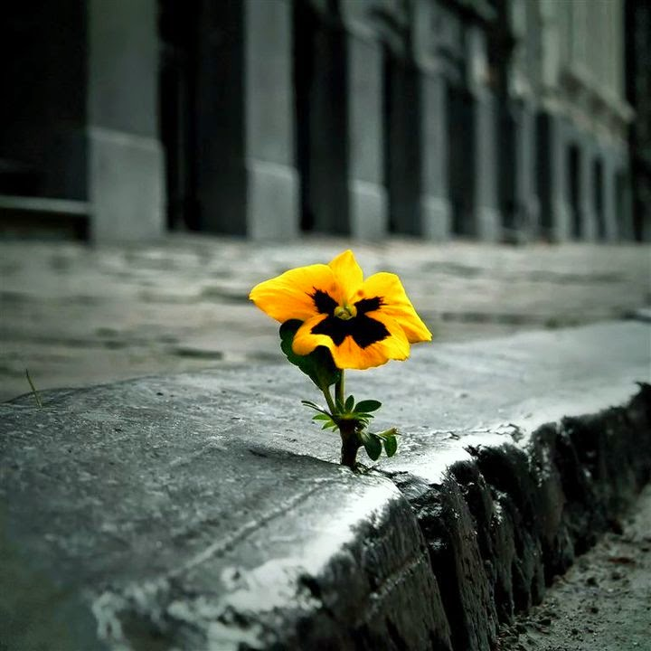 flower-in-sidewalk.jpg