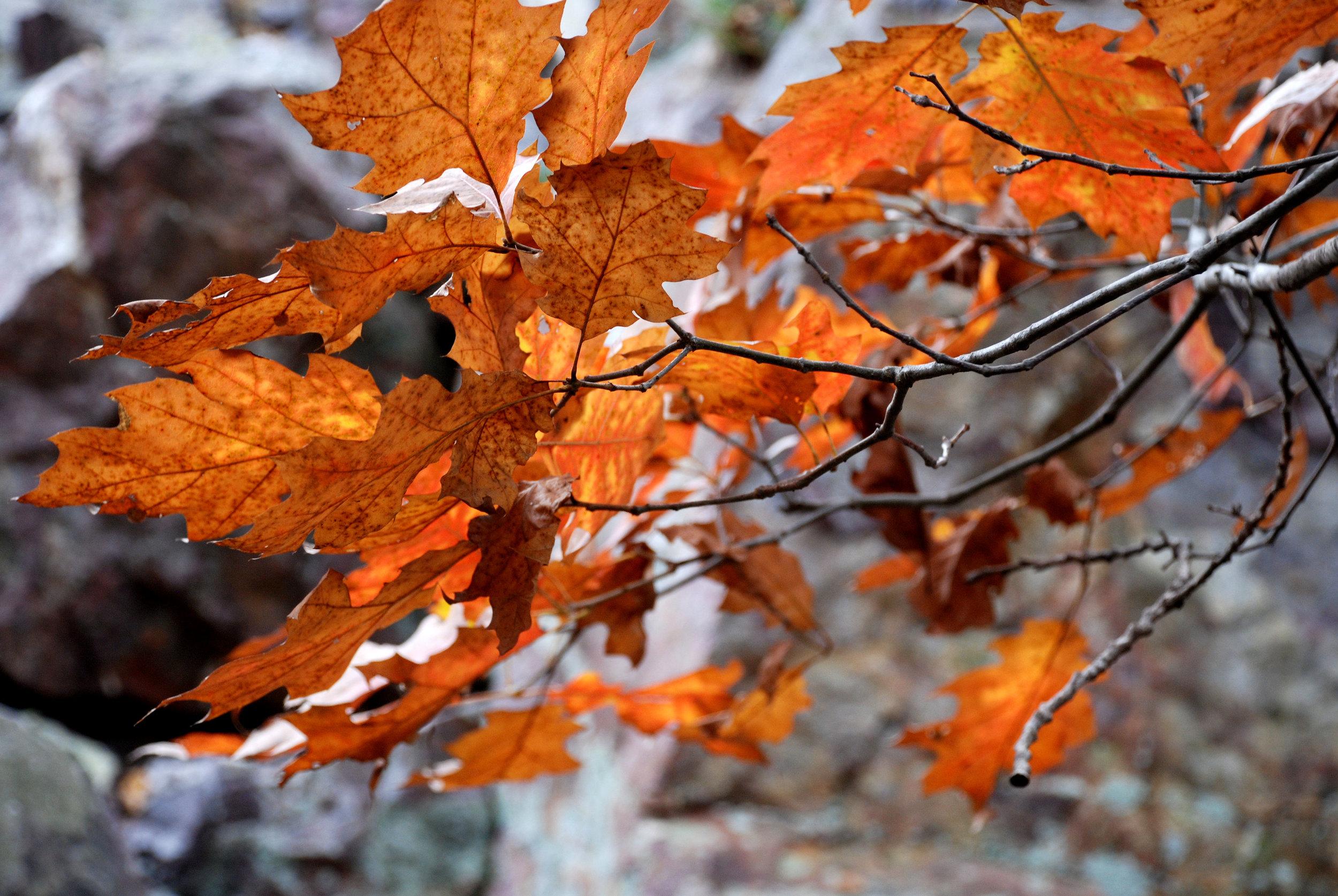 Autumn Leaves 1.jpg