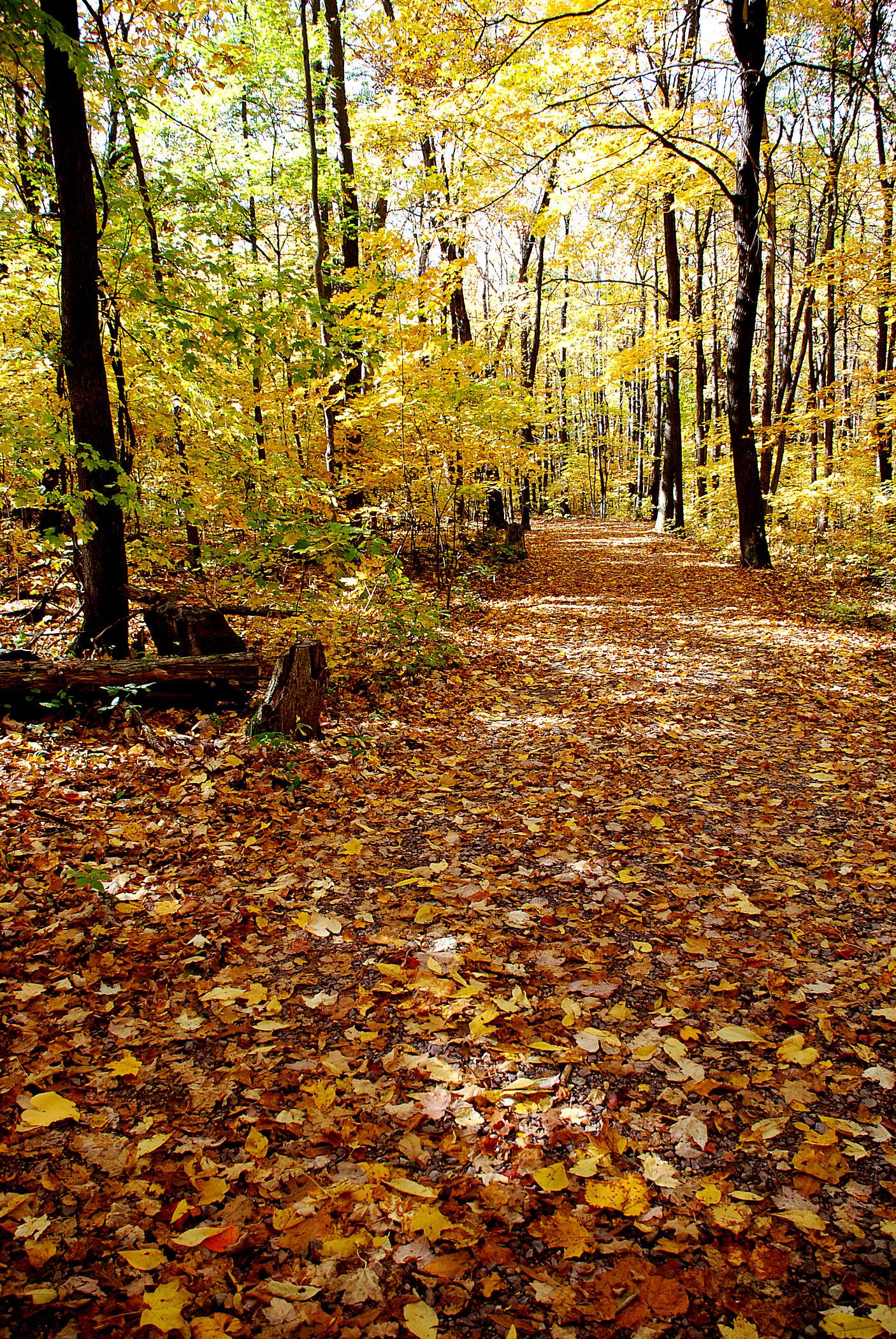 West Trail 2.jpg