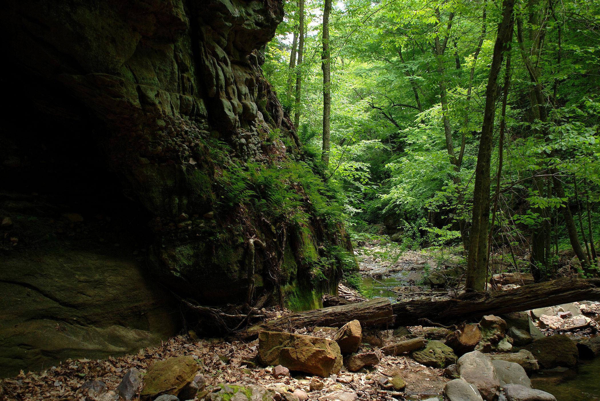 Creek 15.jpg