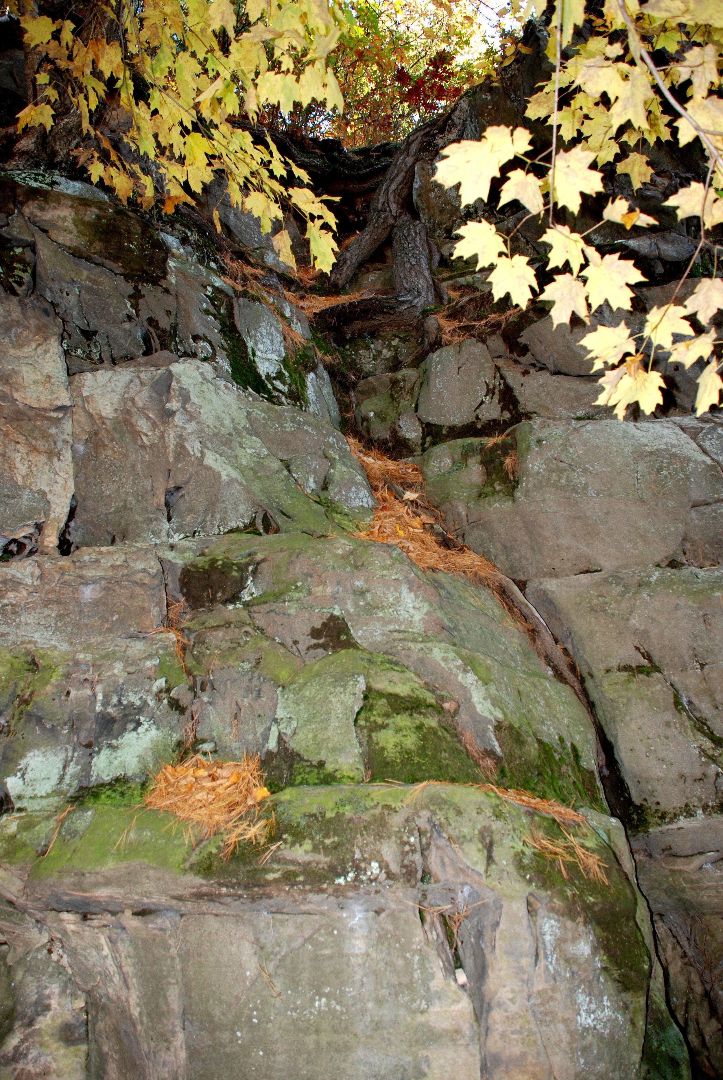 Root Rock.jpg