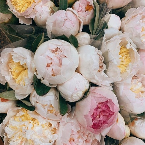 We are ever-blooming, ever-growing, and ever-evolving. 🌸 Learn to love your beautiful, unique self at every stage of the journey. Via @eastolivia  #LoveMineSkincare#LoveMine #naturalskincareproducts#intentions #createcultivate#floral_shop#floral_shot #floral_perfection#glowups#glowandgrow#trustthejourney#flowerpower #flowerpowered #plantpowered #healthyme