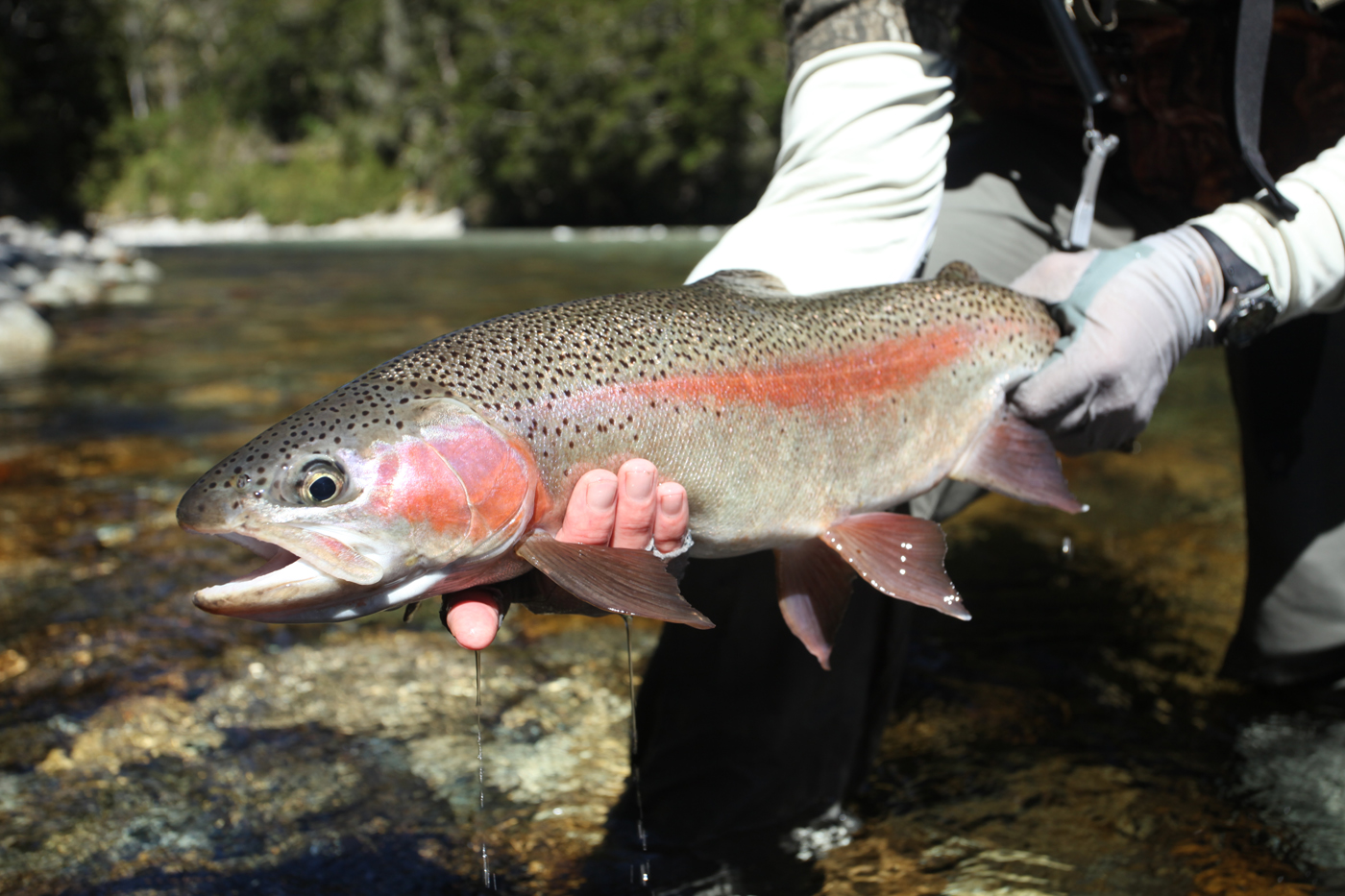 The Fly Fishing Trip of Your Lifetime    Expert Advice for No Extra Cost    Contact Us