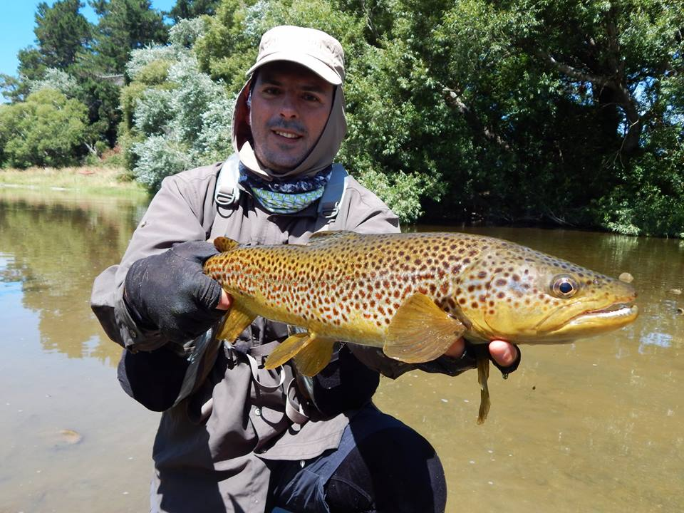 brown-trout-southland.jpg