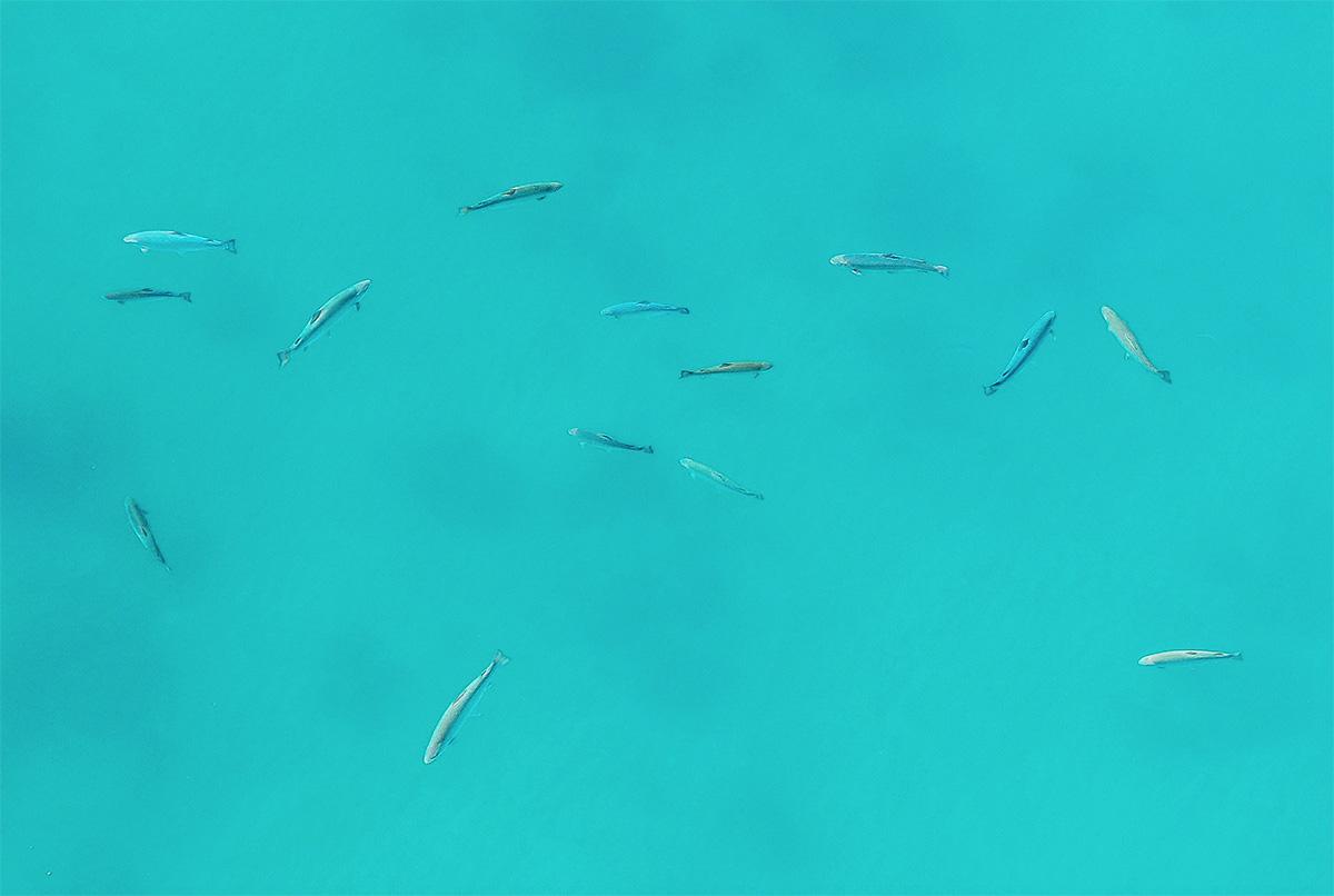 Aerial Fish ELV.jpg