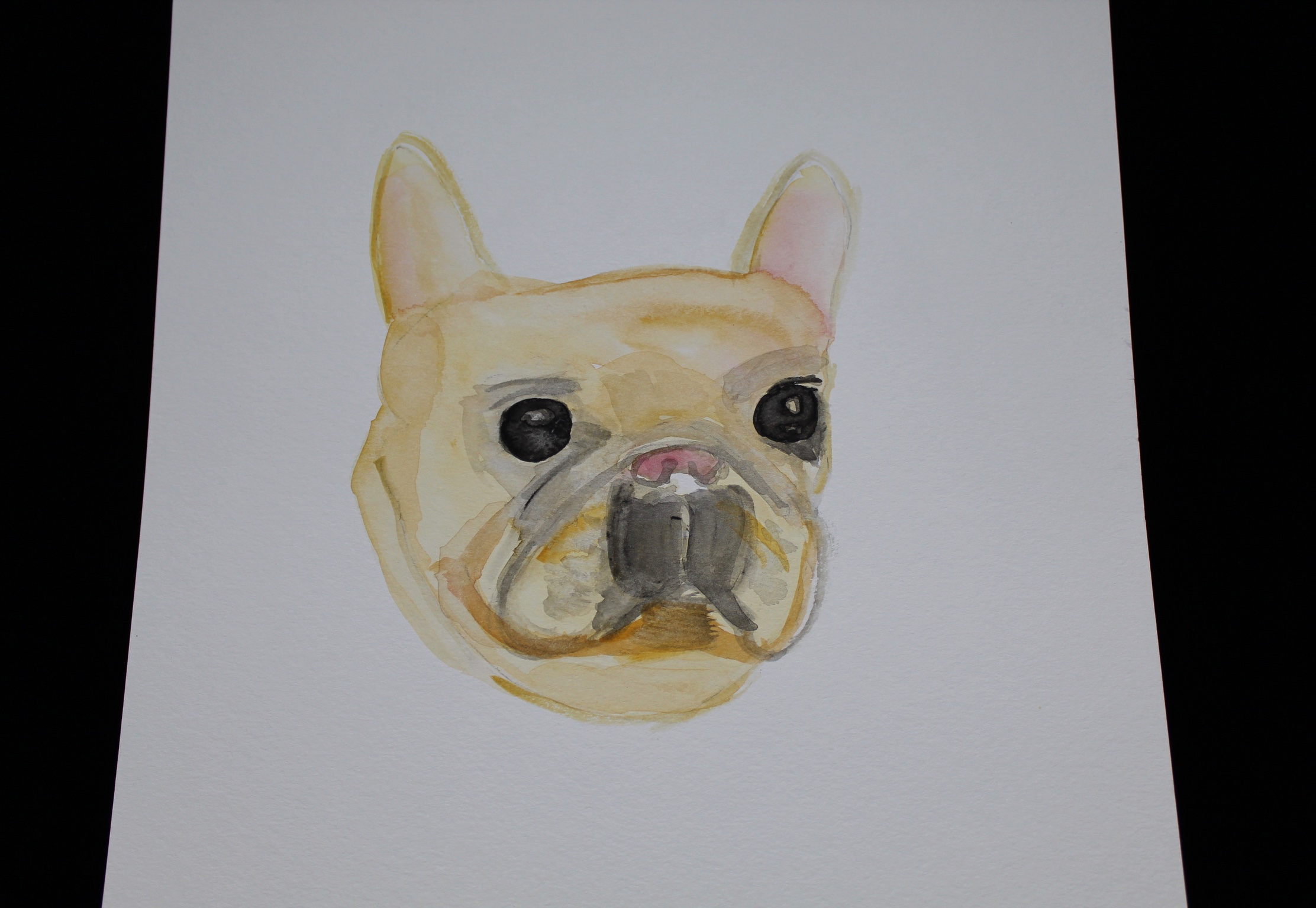 Maeby the Frenchie