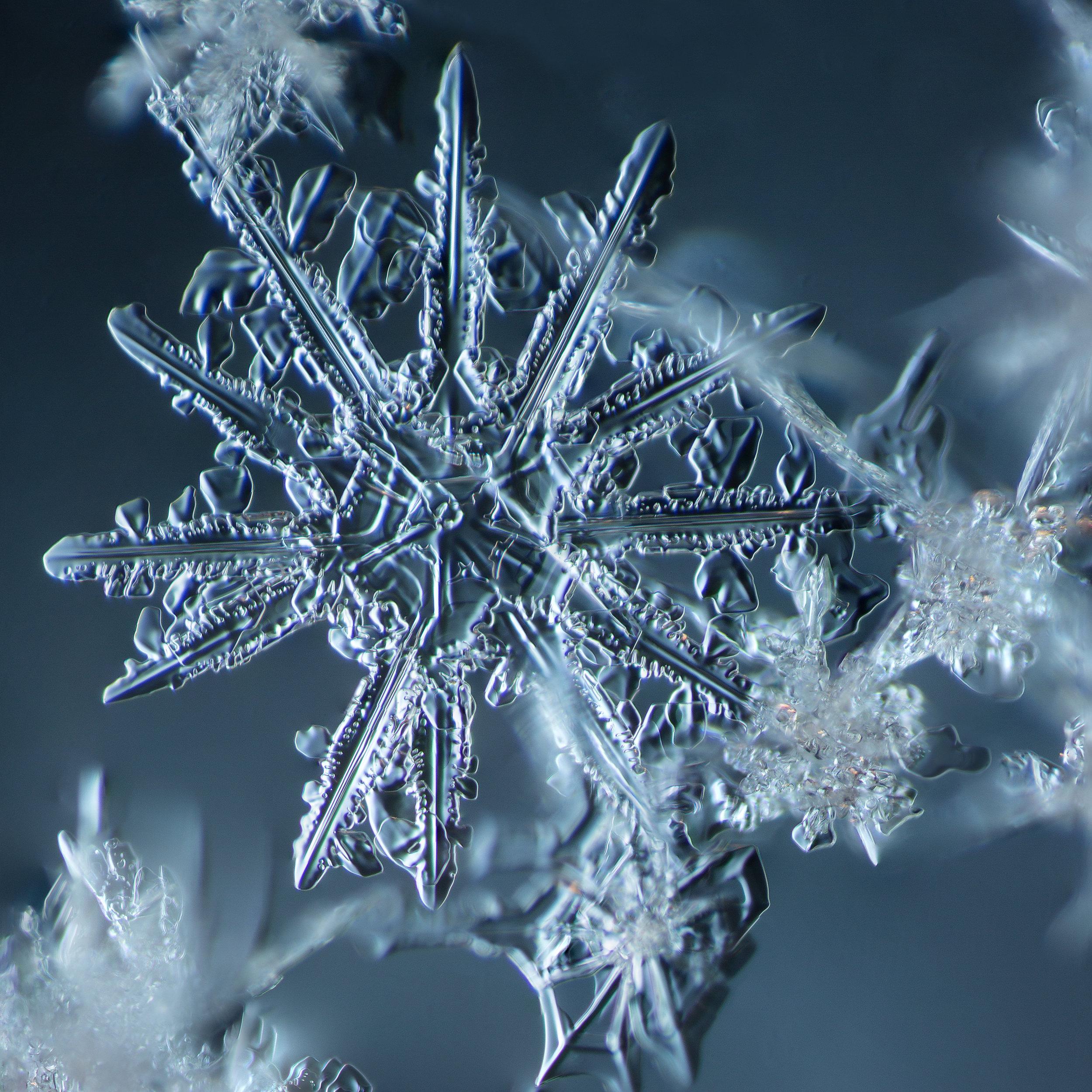 Snowflake 2014.02.09.007.1.JPG