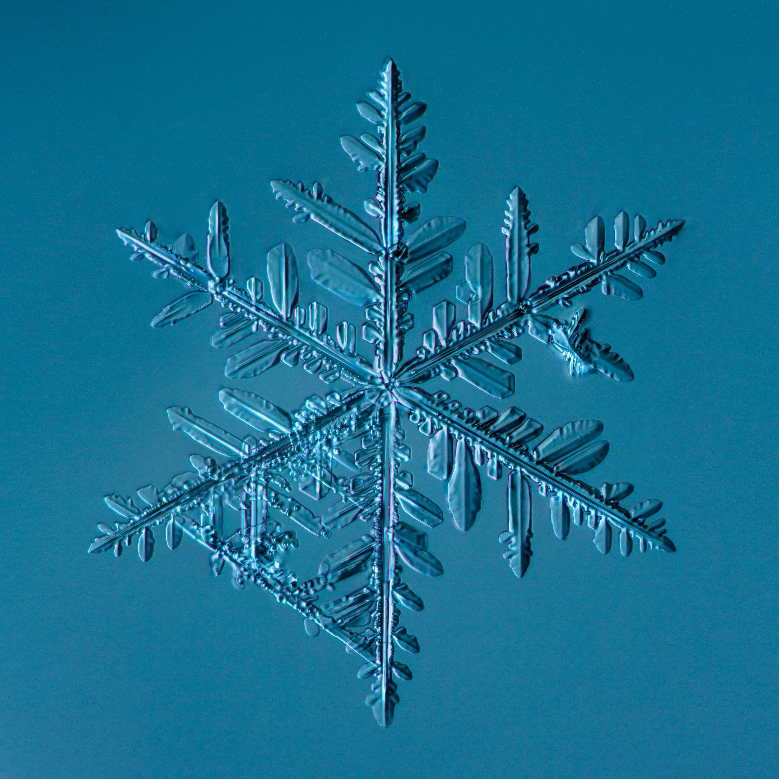 Snowflake 2014.02.23.009.1.JPG
