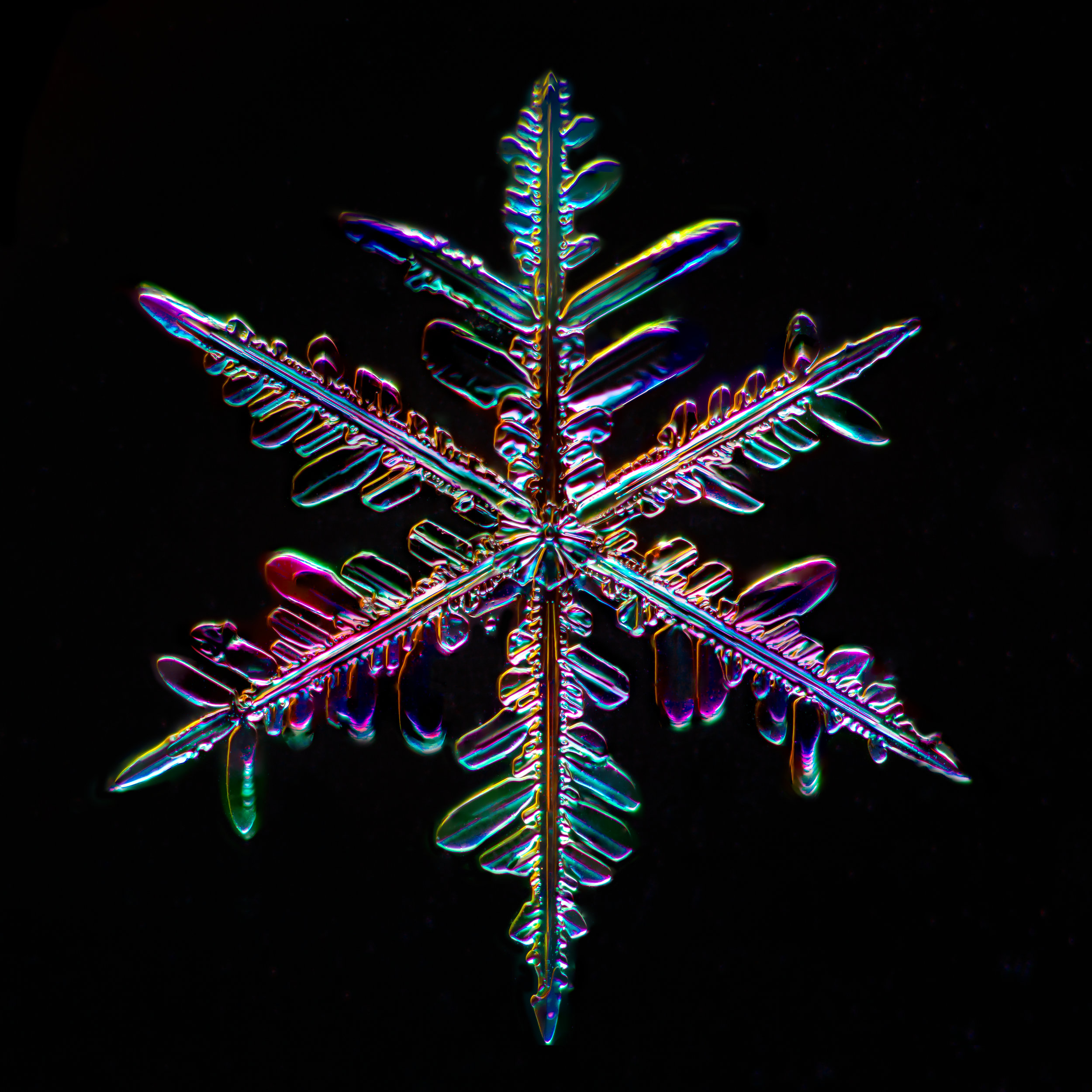 Snowflake 2015.01.25.003.JPG