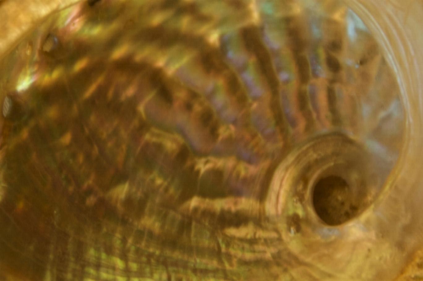 DSC_0168 copy SHELL horiz...1500 pixels 2.jpg