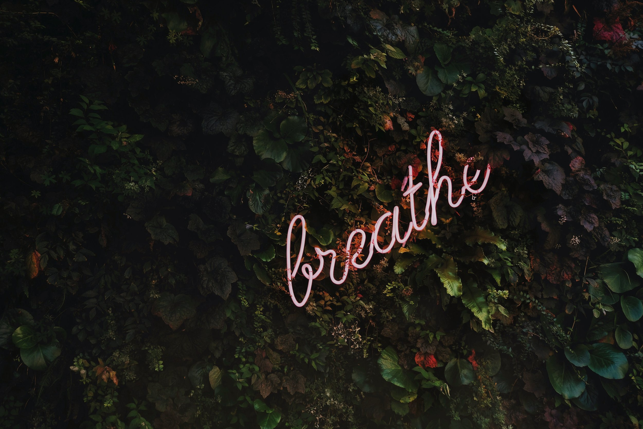 Health and Well-Being - Sometimes, focusing on this, first, allows a successful career and relationship(s) to become the byproduct. Mental, physical, emotional, and spiritual stability will help drive our decision-making in other areas of our lives. Make time to breathe.