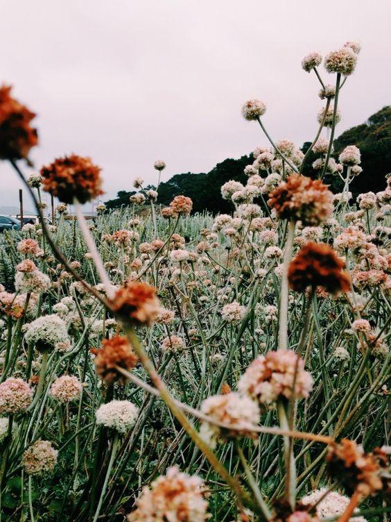 wildflowers field.jpg