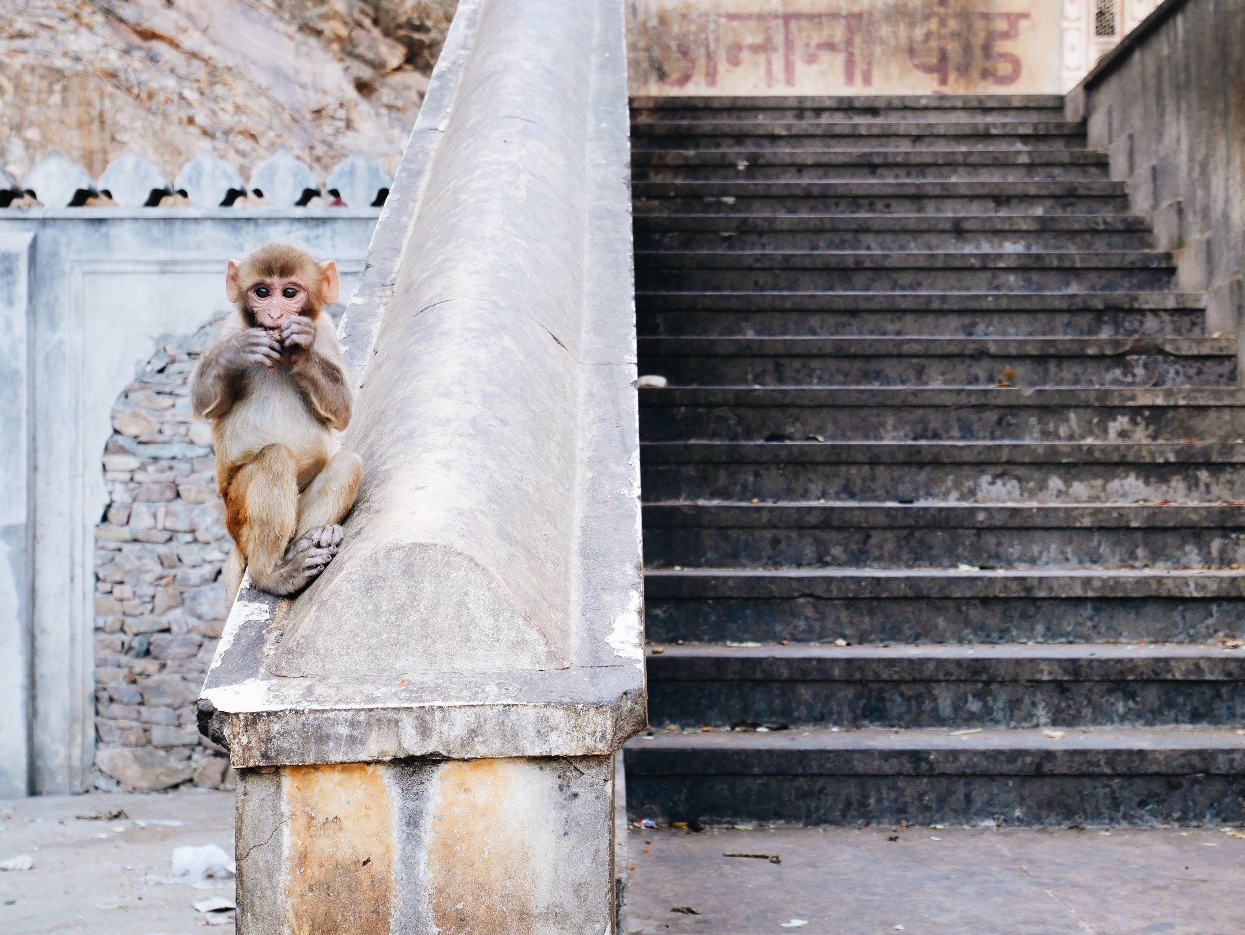Little dude, Monkey Temple