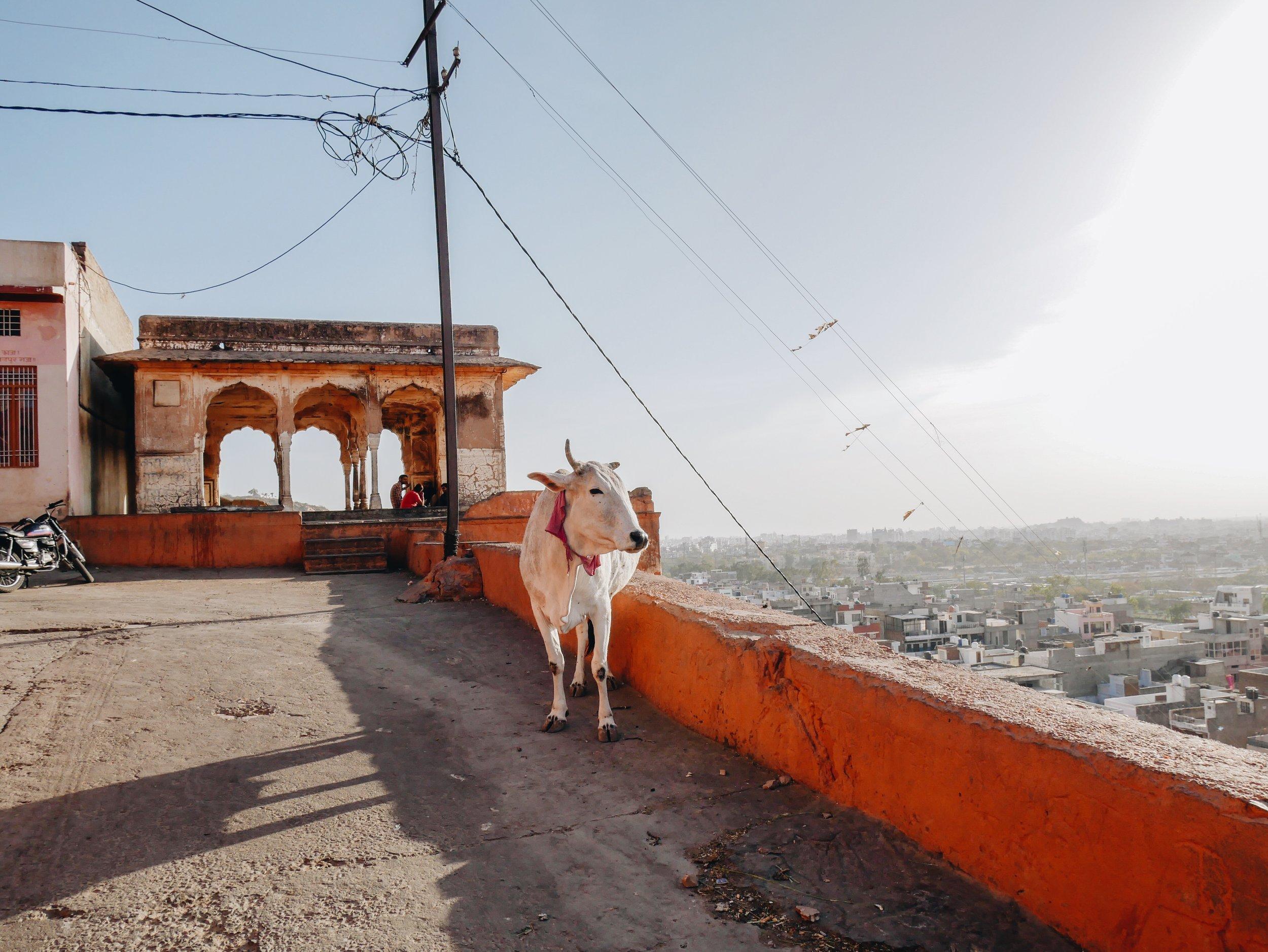 Big dude, Nahargarh Fort