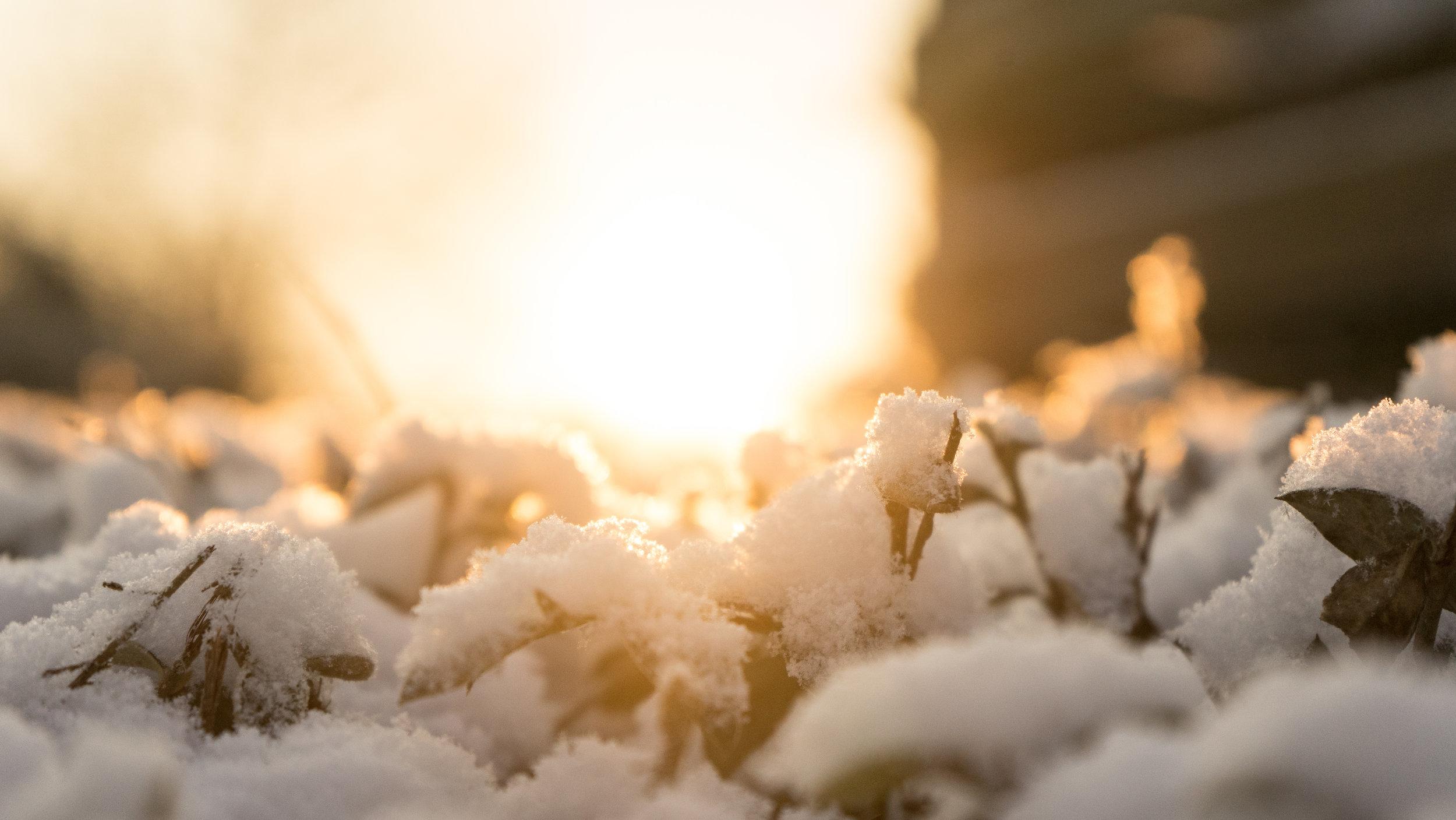 Snow on Sunny Hill