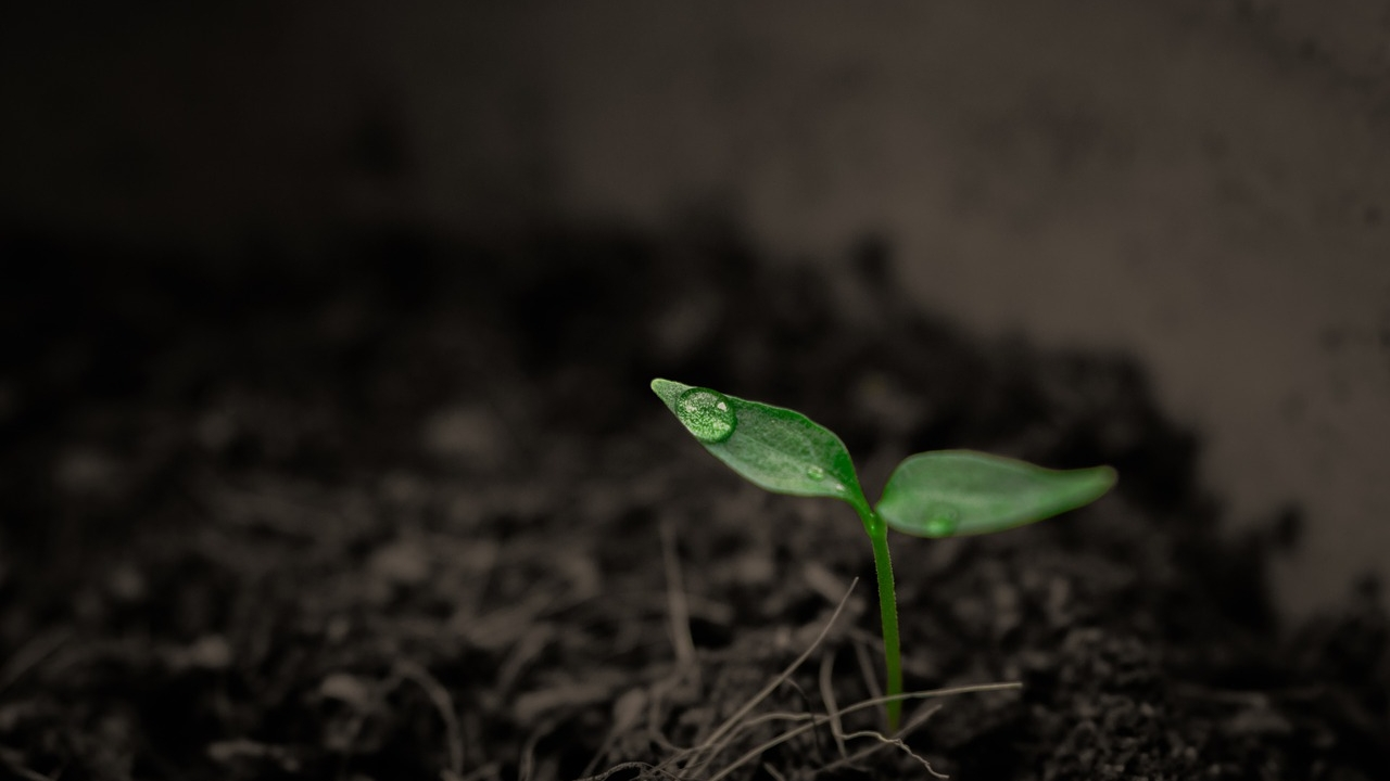 A Smile's Seed -
