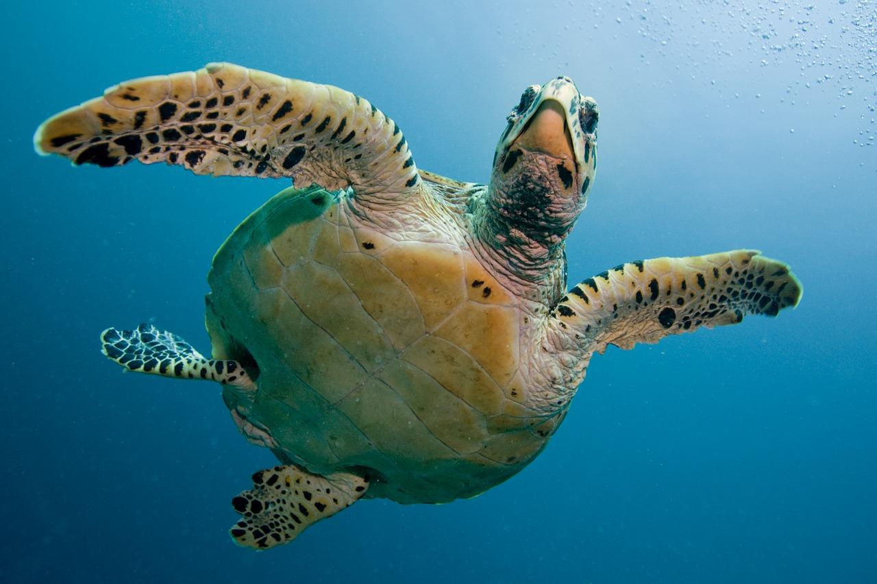 turtle-2250720_1280.jpg