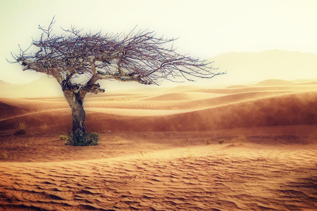 desert-2227962_1280.jpg