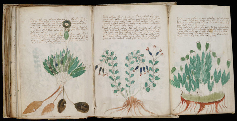 Voynich Manuscript (1408)