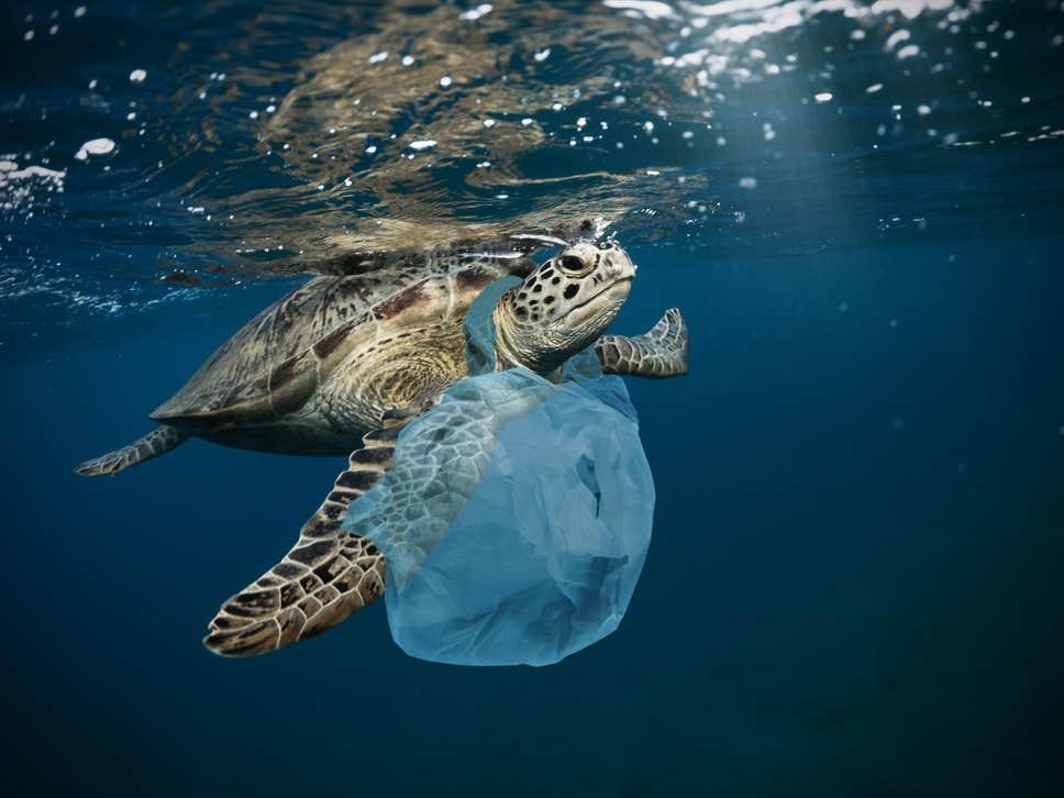 turtle-plastic.jpg