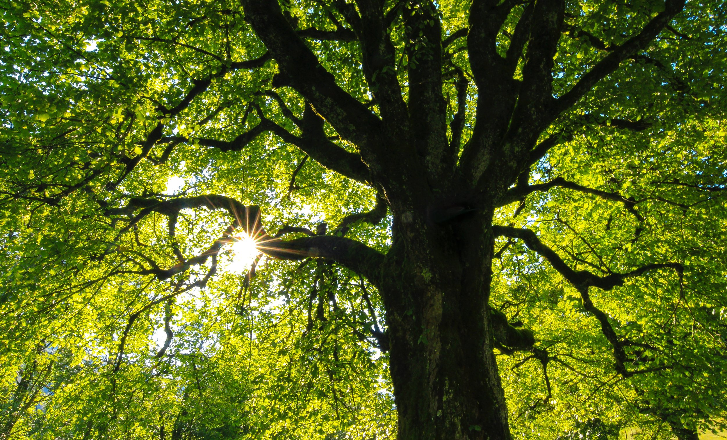 """At Cornell University, an Ivy League school, students can take a one-credit class in Tree Climbing which will """"teach you how to get up into the canopy of any tree, to move around, even to climb from one tree to another without touching the ground."""" -"""