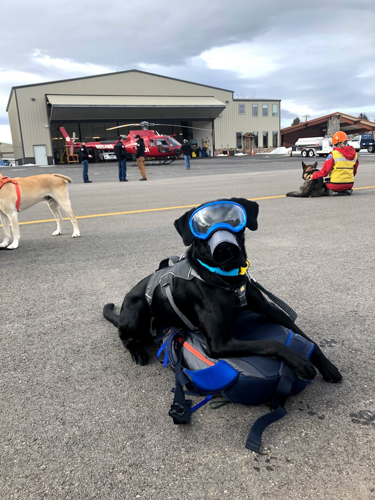 K9 Yodel (in training) shows off his personal protective equipment