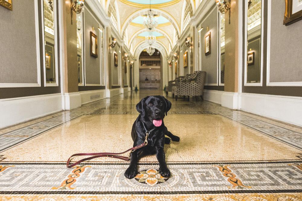Cori Copley, Canine Ambassador, Fairmont Copley Plaza Photo: Zack Deus Photography