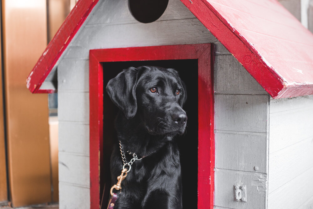 Cori's doghouse is located at the main entrance of the hotel Photo: Zack Deus Photography