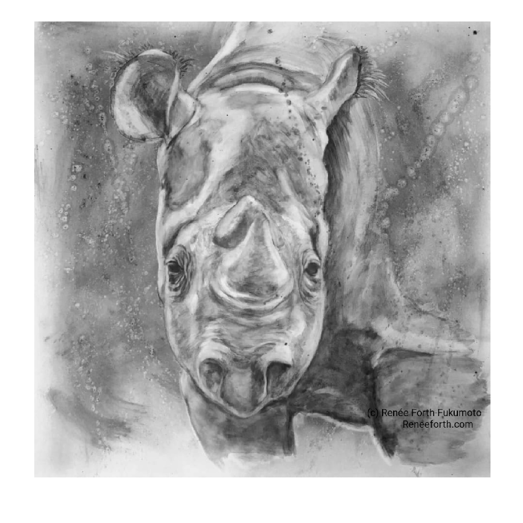"""Threatened"", Rhinoceros, Charcoal on Canvas, 30"" x 40"" x 1.5"""