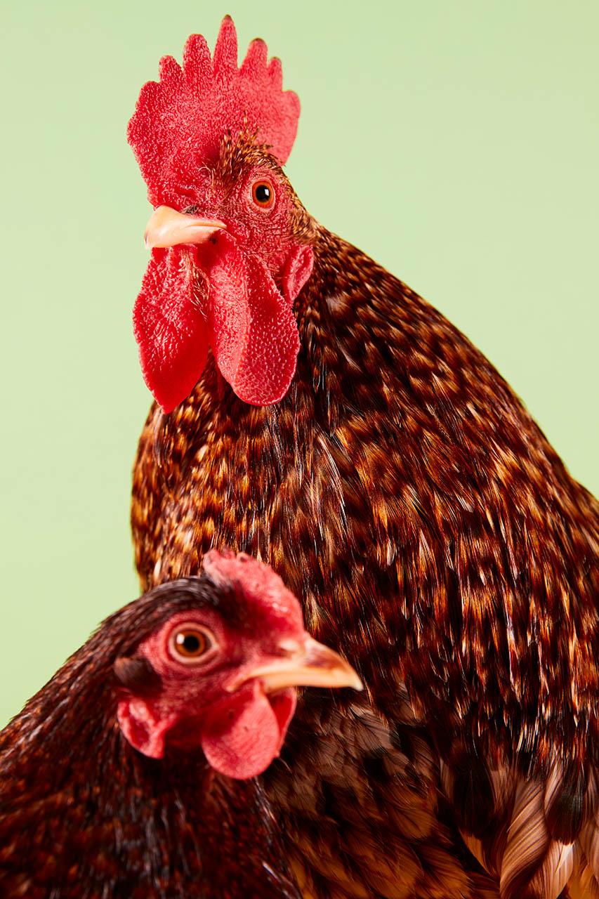 Prim Poultry