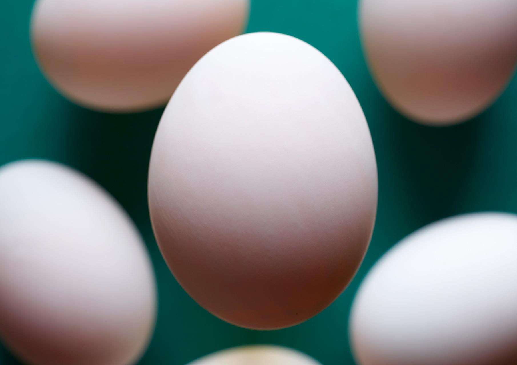 Duck Eggs Group web.jpg