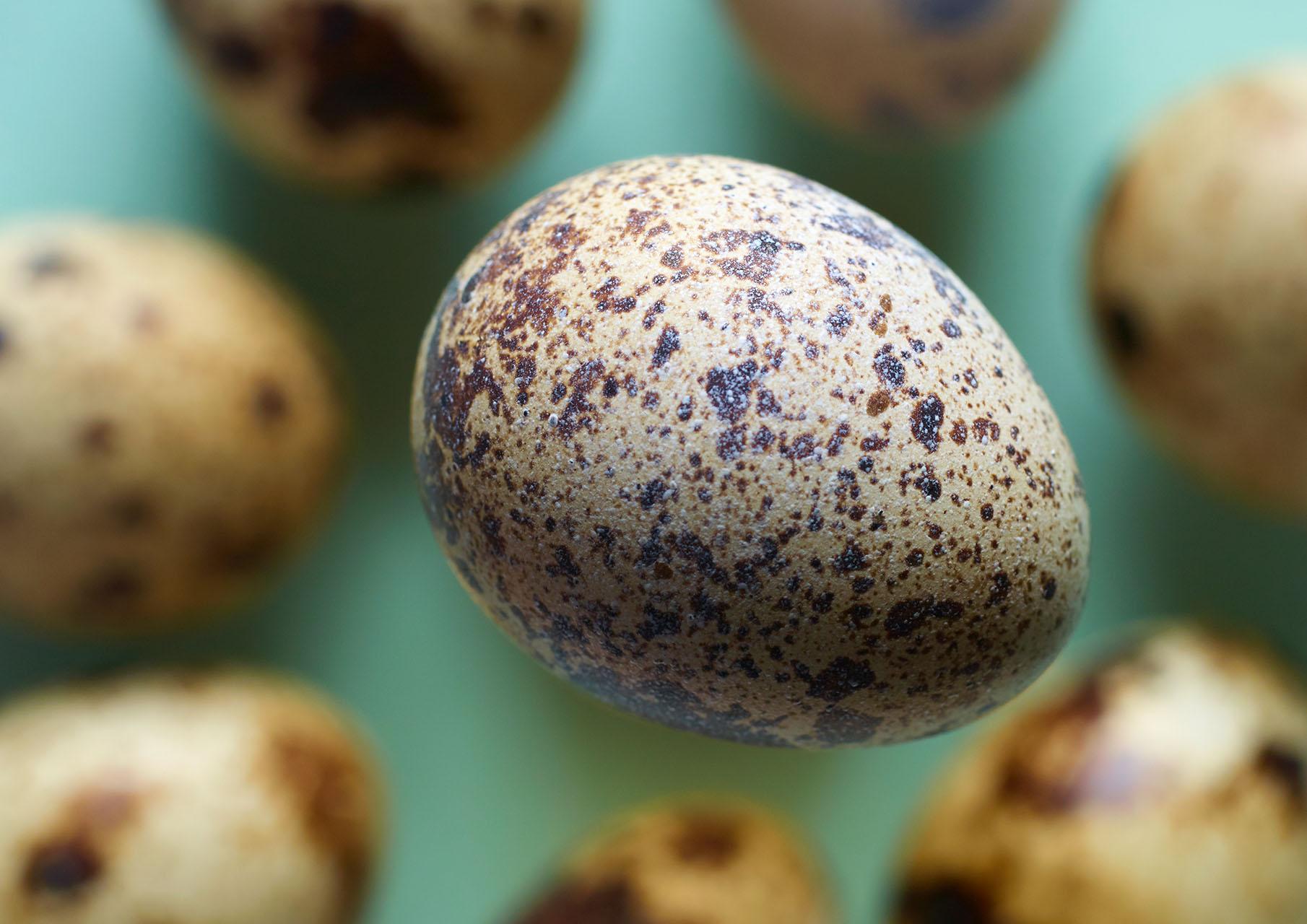Quails Egg Group 1 web.jpg
