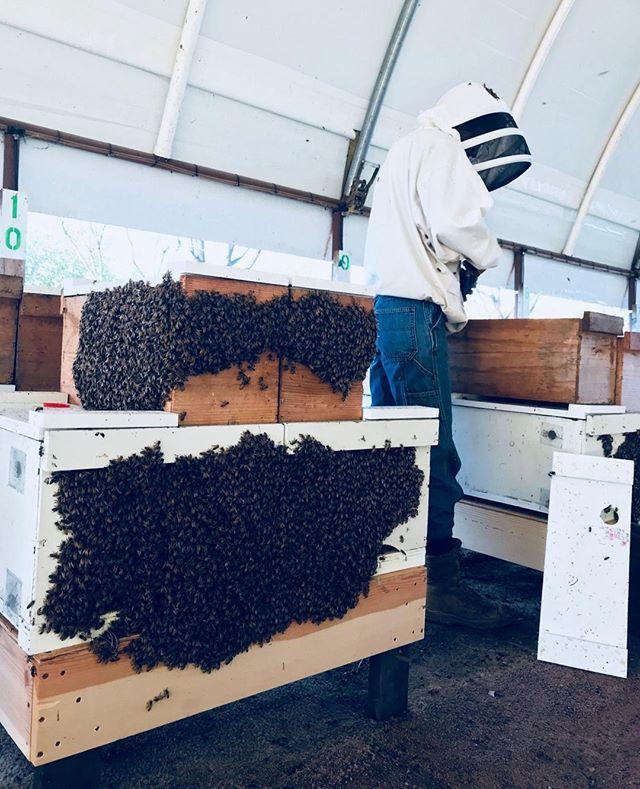 Yeesh, this week has been a hot one!  #TGIF! Anyone have fun weekend plans? . . . . . #beekeeperproblems #beek #bees #saveourbees #beekeeping #hive #beehive #beehives #beekeepersofinstagram #apiary #bee #apiaries #anbees #honey ##californiabees #lovebees #beekeeper #beekeepers #beekeeperlife #savethebees 